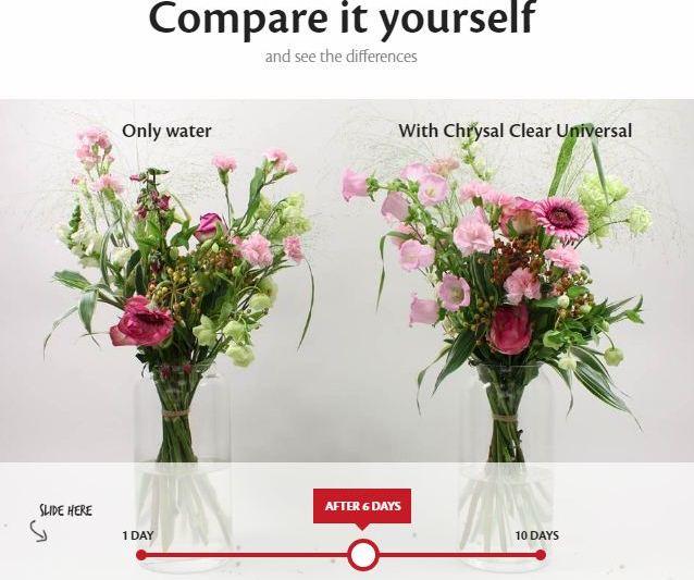 flower-comparison