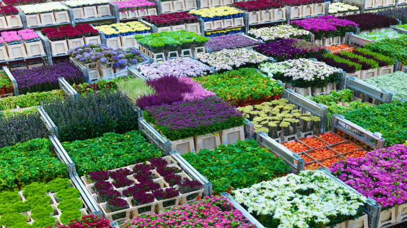 Florint » Flower and plant exports from The Netherlands up ...