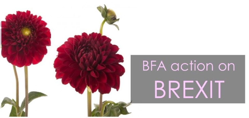 BFA action on BREXIT